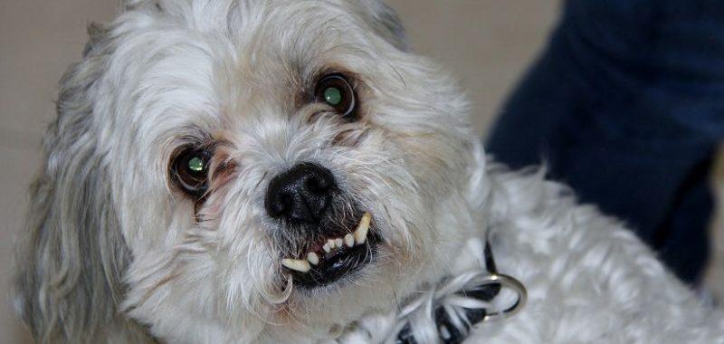 יש לכם כלב בבית? תחשבו על ביטוח צד ג'