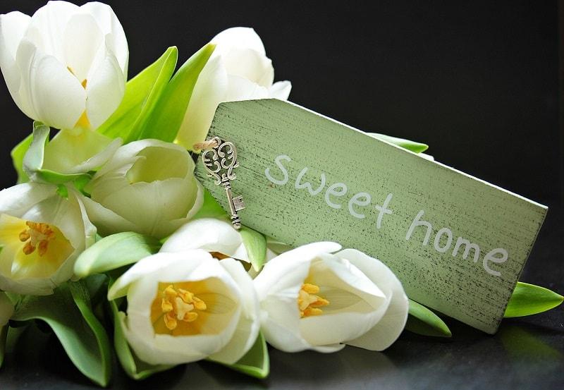 פרחים לבית חדש - עם ביטוח תכולת דירה